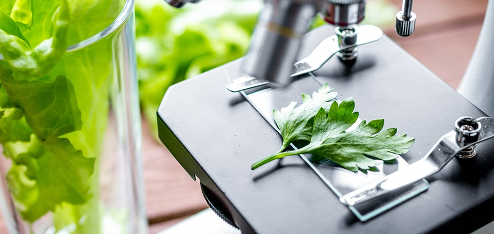 Food and Drink R&D Tax relief